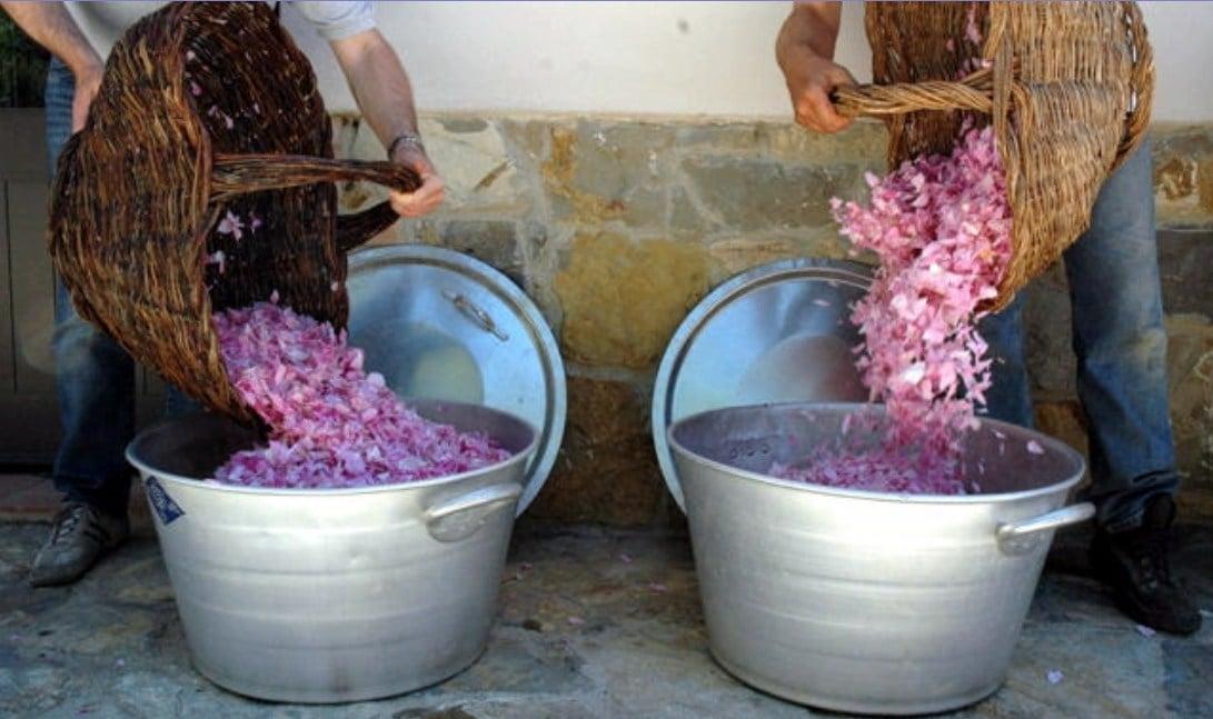 lavanda-chianti-02.jpg