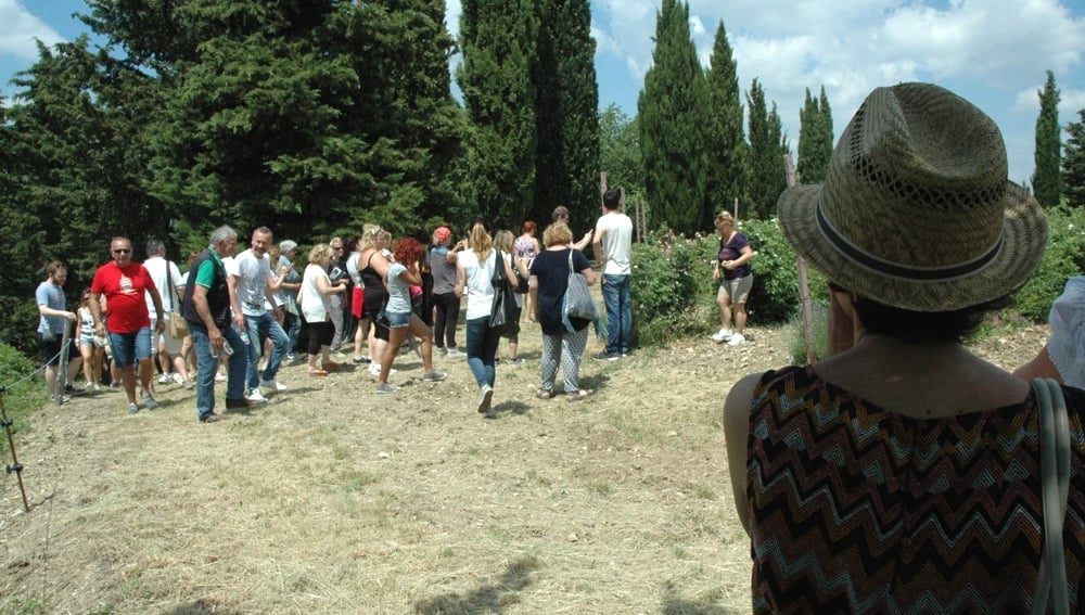 Una coltivazione di rose aperta al pubblico nella tenuta di Casalvento