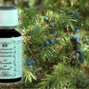 Pharmaceutical glass bottle of pure Juniper essential oil