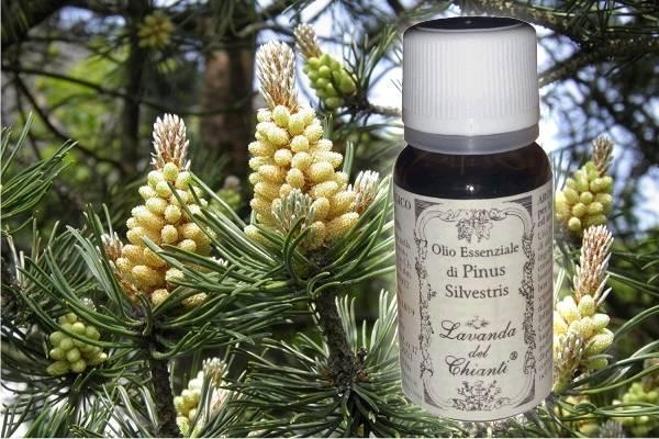 Flacone in vetro farmaceutico di puro olio essenziale di Pino