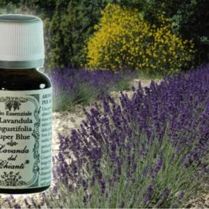 Pharmaceutical glass bottle of pure Lavender angustifolia Super Blue essential oil
