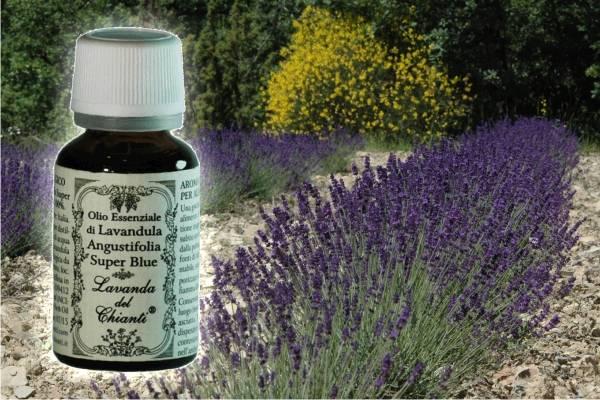 Flacone in vetro farmaceutico di puro olio essenziale di Lavanda angustifolia Super Blu